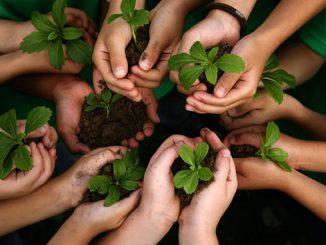 Trädgårdsterapi