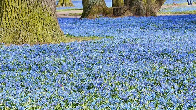 Vackra blå blommor