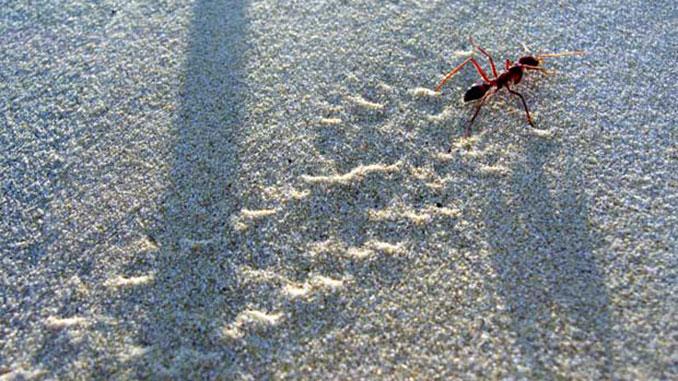 Små myrsteg